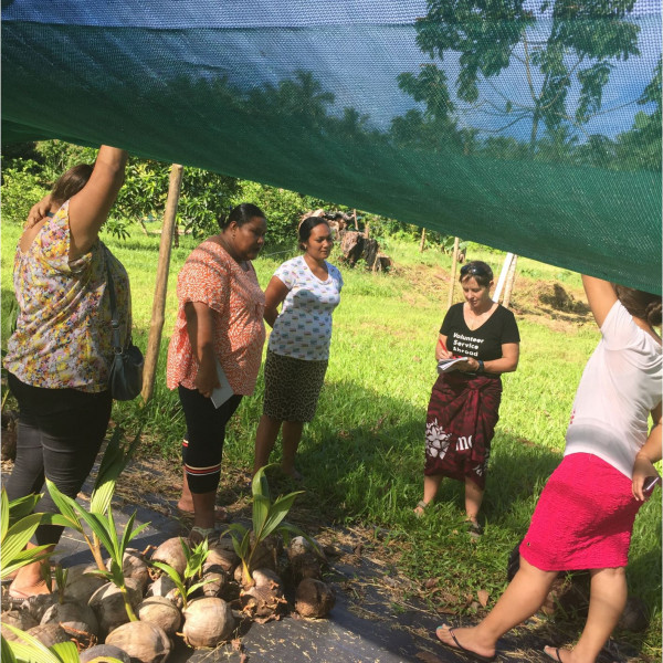Discussions with local MAF branch on collaberation and the use of their improved rootstock of young coconut plants.